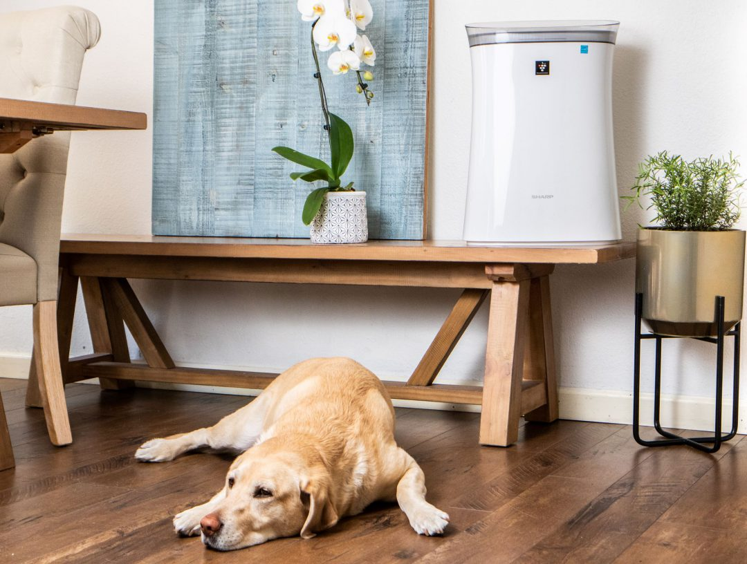 dog laying next to Sharp air purifier on a bench