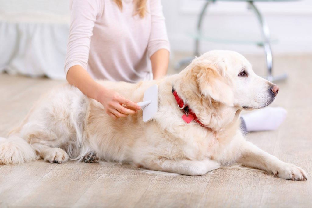 Brush Your Pet Daily to Reduce Pet Dander Allergies