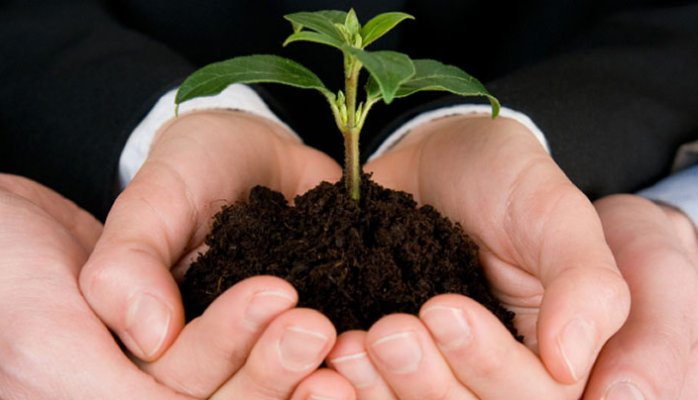 Holding a tree in a palm of hands representing growth and responsibility to social environments.