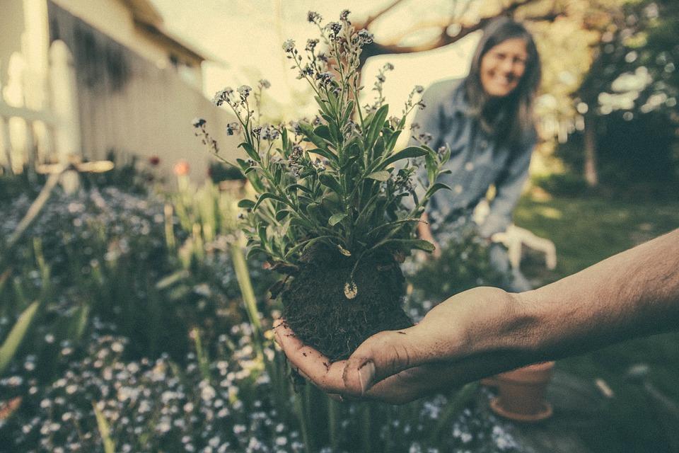 Outdoor gardening.