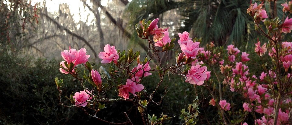 Flowers in a wooded area.