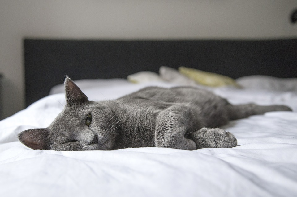 Cat laying down on a bed.