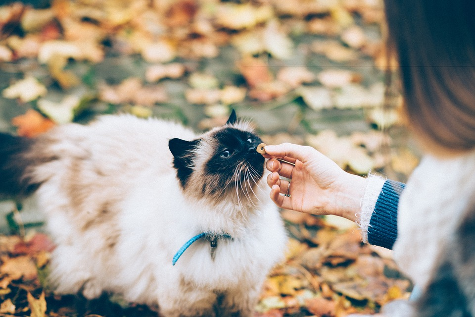 Woman giving her cat a treat outdoors.