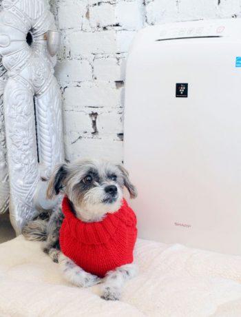 Puppy dog next to a Sharp Air Purifier.