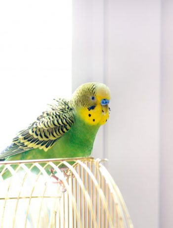 Parrott in a cage near a window.