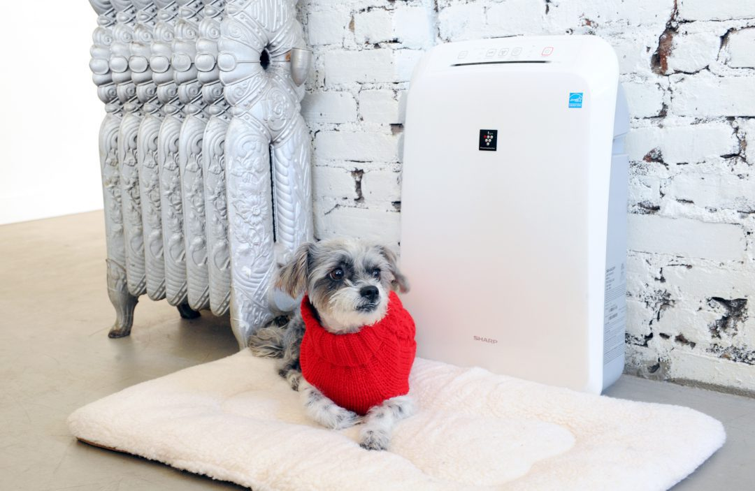 Dog sitting on a bed next to air purifier.
