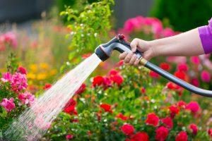 Watering glowers in a garden