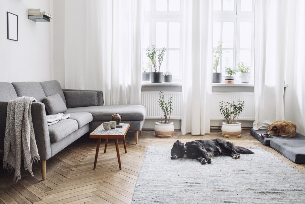 living room with dogs laying down.
