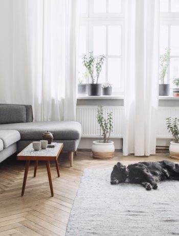 Living room with dog laying on rug