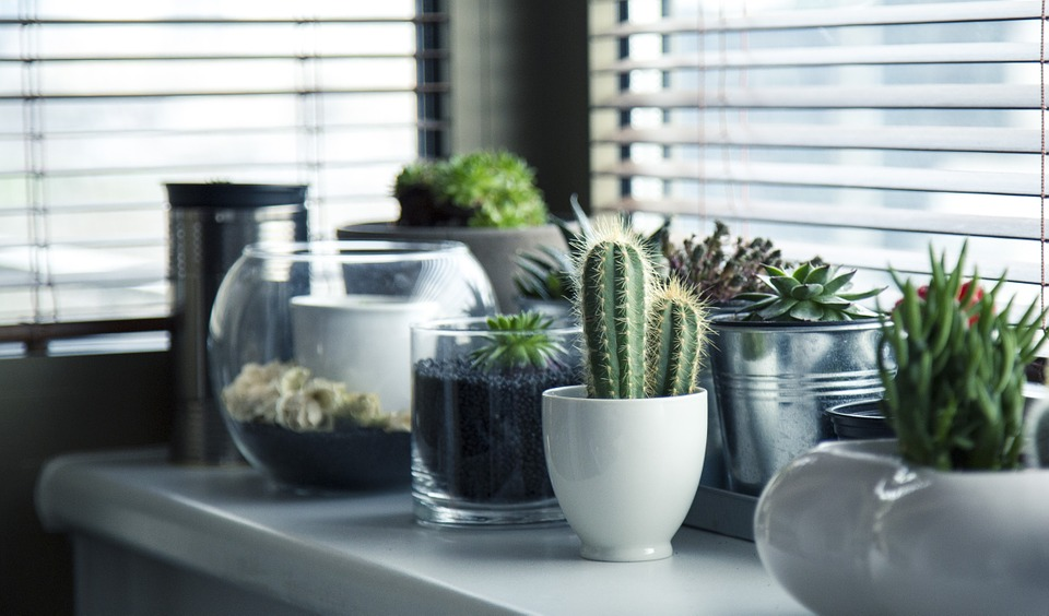 Cacti and plants on a shelf next to a window.