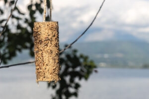 Bird feeder made with cardboard, hanging in a tree
